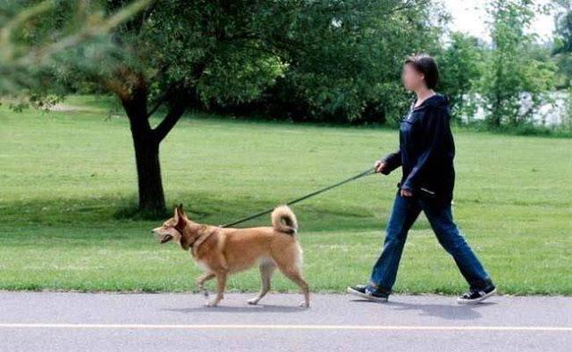 यहां पालतू कुत्ते को रोजाना न घुमाने पर लगता है भारी भरकम जुर्माना