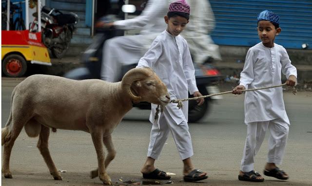अब्दुल करीम ने 22 लाख रुपये में बेचे 3 बकरे!