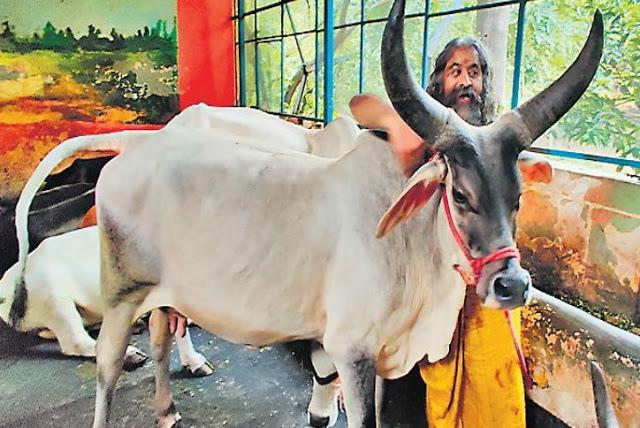 मुफ्त में गाय देती है ये गोशाला, लेकिन है ये 'बड़ी शर्त'