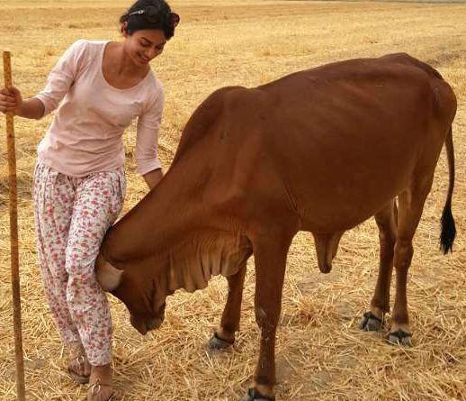 IAS अधिकारी की बेटी वैष्णवी सिन्हा खेती करके पाल रही हैं गाय