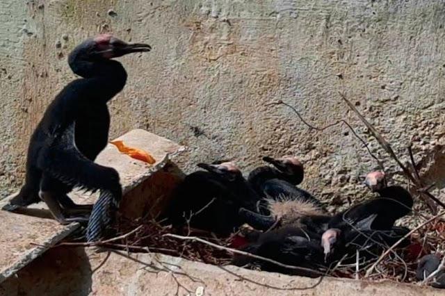 पेड़ कटने के 2 दिन बाद तक टूटे अंडों के पास बैठे रहे पक्षी