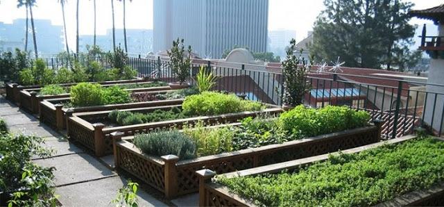 छत पर खेती कर साल भर में कमा लिए 4 करोड़ रुपए
