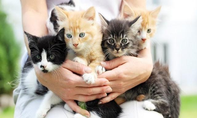 जानिए बिल्ली के बारे में कुछ 'रोचक तथ्य'