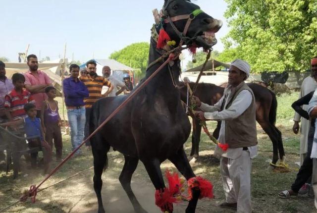 चैती मेले में डांस करने वाला घोड़ा बना आकर्षण का केंद्र