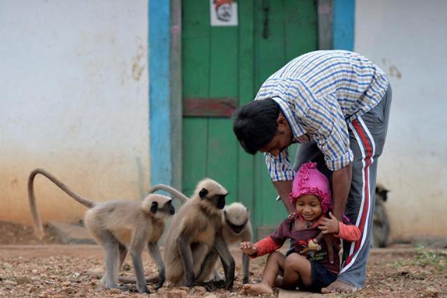 बंदरों के साथ खूब खेलता है यह 2 साल का बच्चा!