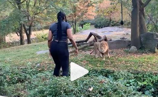 चिड़ियाघर में शेर के घेरे में कूदकर जब ये महिला करने लगी डांस